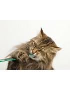 Tandvård och munhygien för katt