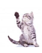 Produkter för tassar och klor till katt