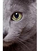 Produkter för ögonvård för katt