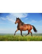 Veterinärprodukter för häst. Hög kvalitet från Veterinarbutiken.se