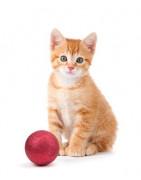 Aktivitetsleksaker för katt