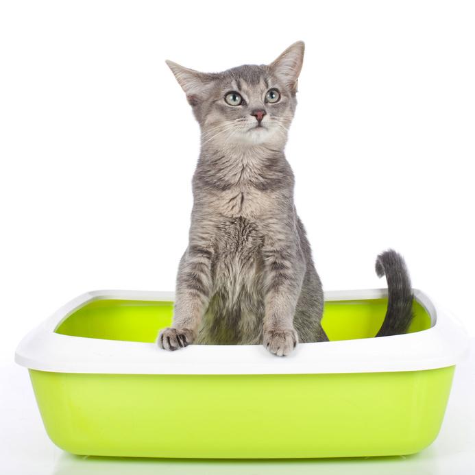 hur mycket vatten ska en katt dricka
