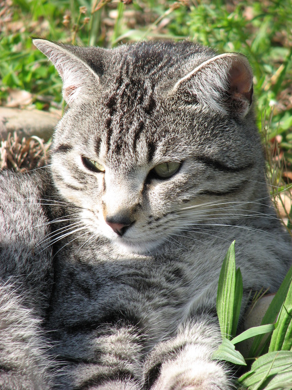 mot fästingar katt