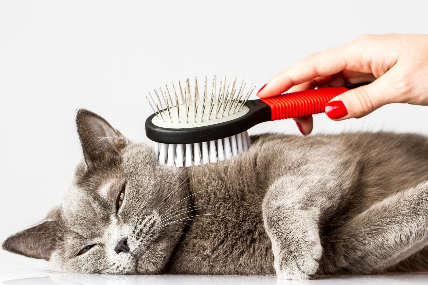 sköldkörtelproblem katt symptom