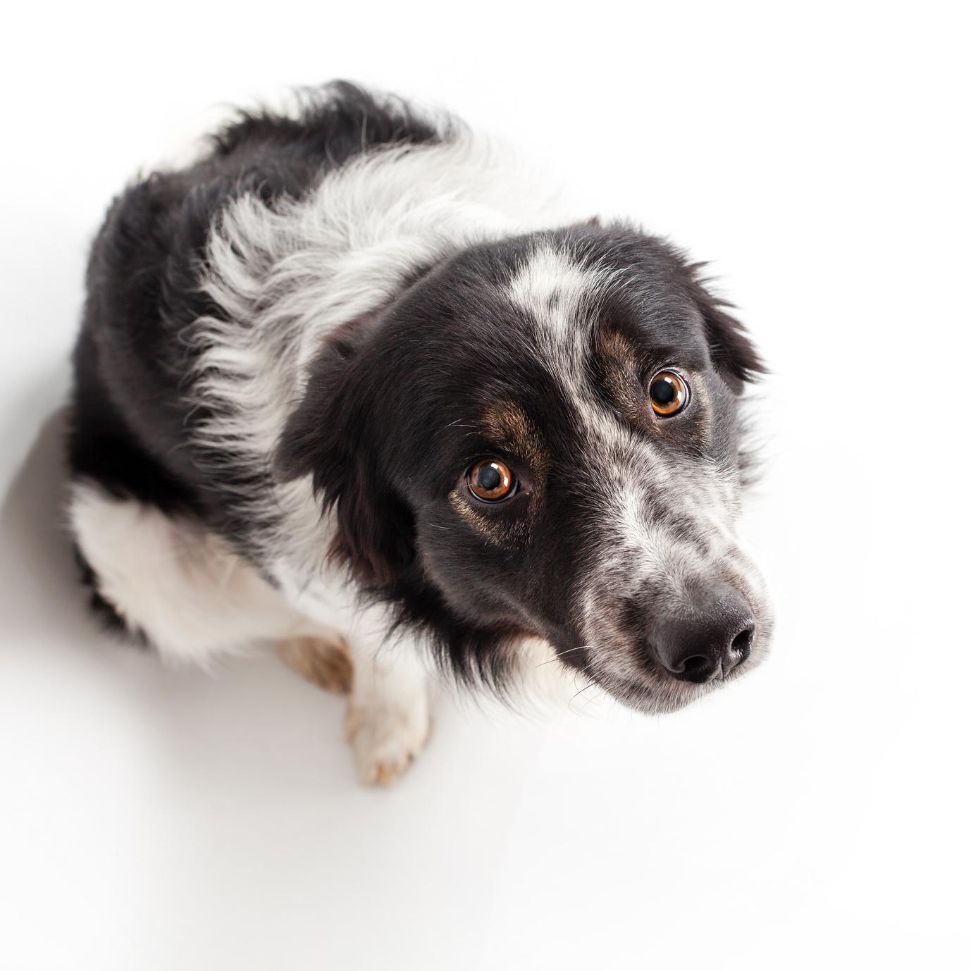 Fler hundar tuggar lugnande pa nyar