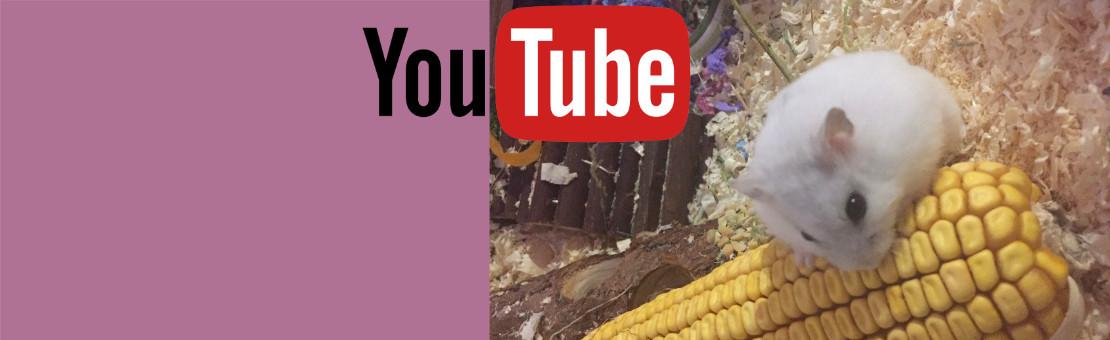 veterinärbutiken-youtube-kanal