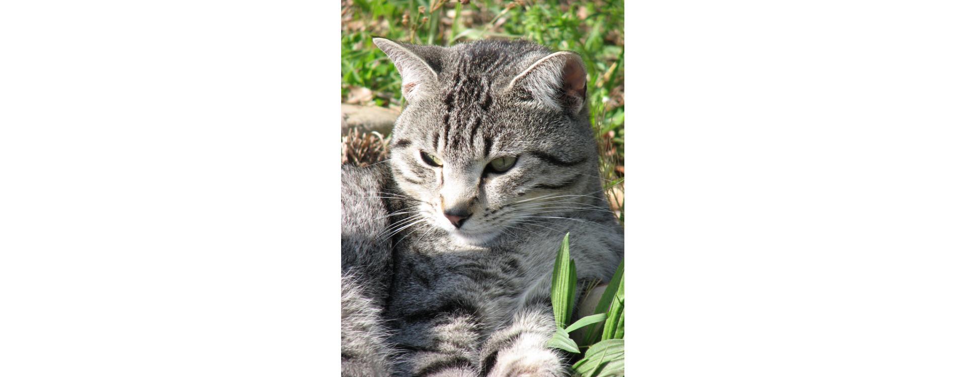 vitaminer för katter